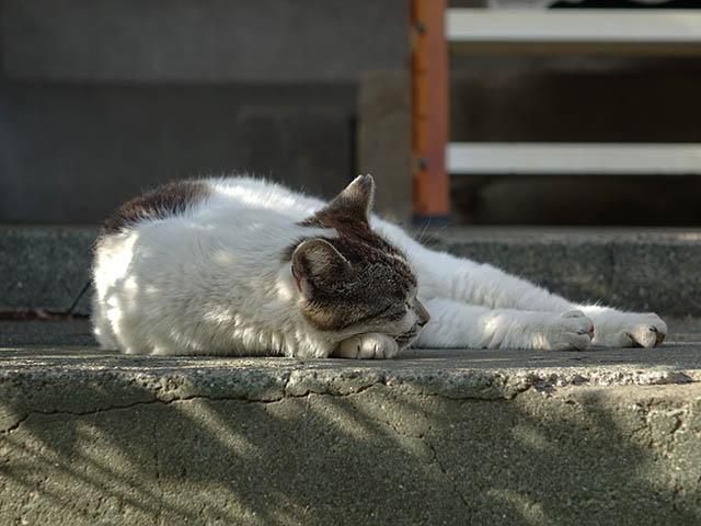 白峯寺の猫, #3739