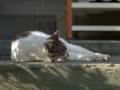 白峯寺の猫, #3740