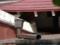 白峯寺の猫, #3741