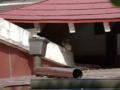 白峯寺の猫, #3742