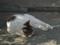 白峯寺の猫, #3743