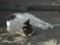 白峯寺の猫, #3744