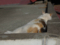 白峯寺の猫, #3745
