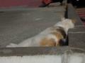 白峯寺の猫, #3746