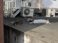 白峯寺の猫, #3747