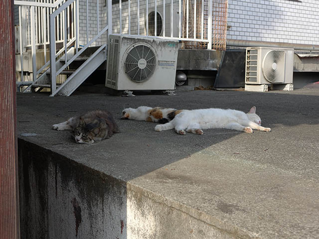 白峯寺の猫, #3748