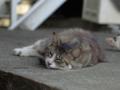 白峯寺の猫, #3749