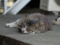 白峯寺の猫, #3750