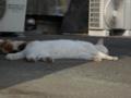 白峯寺の猫, #3751