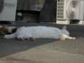 白峯寺の猫, #3752