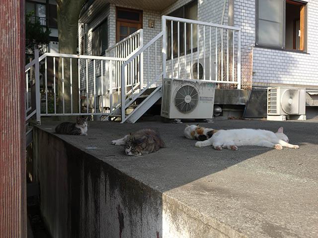 白峯寺の猫, #3753