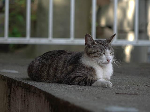 白峯寺の猫, #3754
