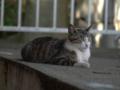 白峯寺の猫, #3755