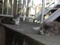 白峯寺の猫, #3756