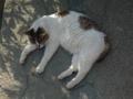 白峯寺の猫, #3757