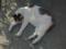 白峯寺の猫, #3758