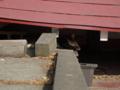 白峯寺の猫, #3760