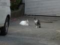 白峯寺の猫, #3784