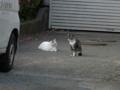 白峯寺の猫, #3785
