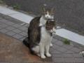 Yuki & Koyuki, #3798