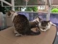 Mama-Imo, Yuki & Hoshi, #0785