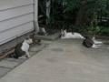 Sora, Yuki, Koyuki & Hoshi, #0905