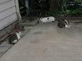 Sora, Yuki & Hoshi, #0909