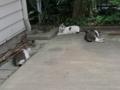 Sora, Yuki & Hoshi, #0910