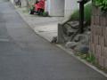Local Cat, #1094 (Closeup)