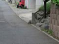 Local Cat, #1095 (Closeup)