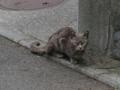 Local Cat, #1096 (Closeup)