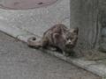 Local Cat, #1097 (Closeup)