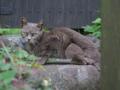 Local Cat, #1098