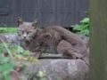 Local Cat, #1099
