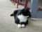 Cats of Houtong, #4132