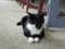Cats of Houtong, #4133