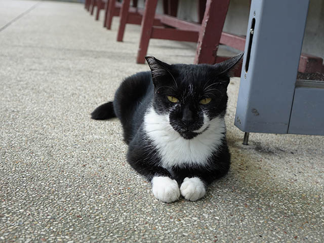 Cats of Houtong, #4135