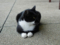Cats of Houtong, #4137