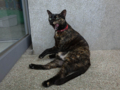 Cats of Houtong, #4148