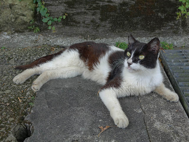 Cats of Houtong, #4155
