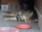 Cats of Houtong, #4158