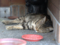 Cats of Houtong, #4159