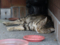 Cats of Houtong, #4161