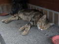 Cats of Houtong, #4163
