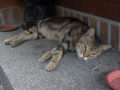 Cats of Houtong, #4164