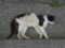 Cats of Houtong, #4165