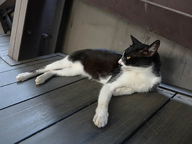 Cats of Houtong, #4176