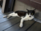 Cats of Houtong, #4177