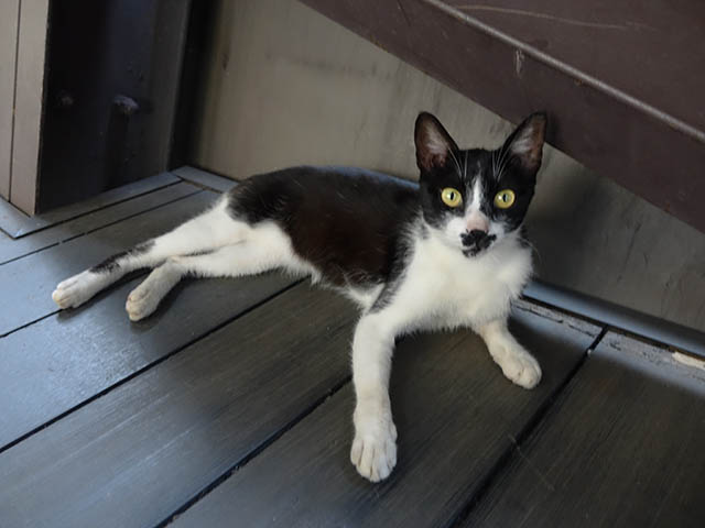 Cats of Houtong, #4178