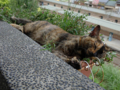 Cats of Houtong, #4185